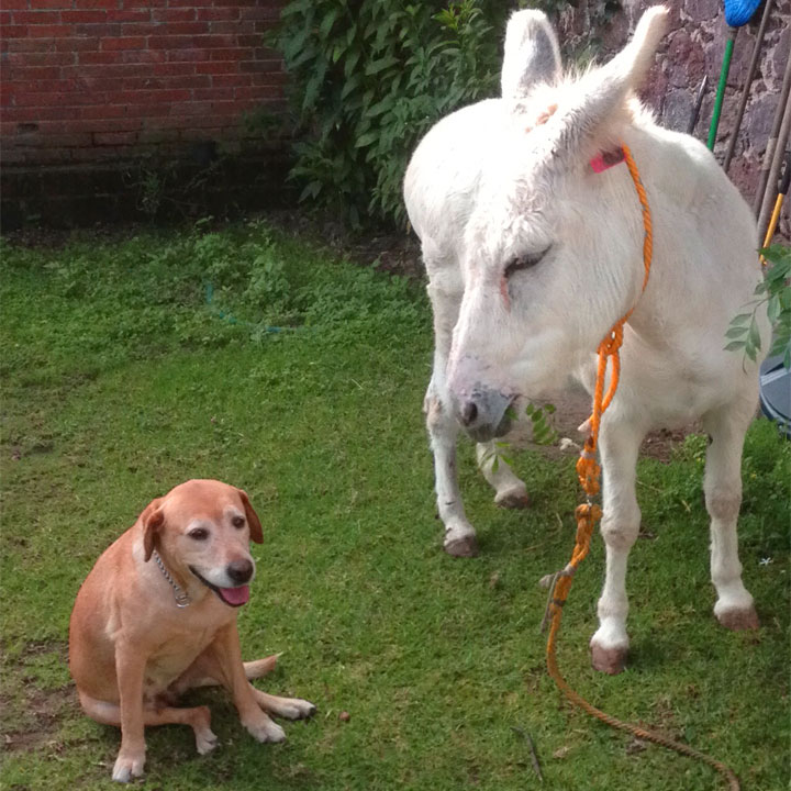 Il cane, l'asino e l'importanza delle gentilezze