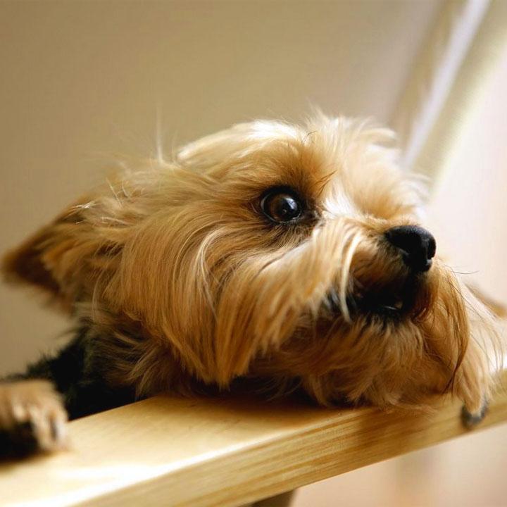 Il prezzo dei cuccioli cagnolini