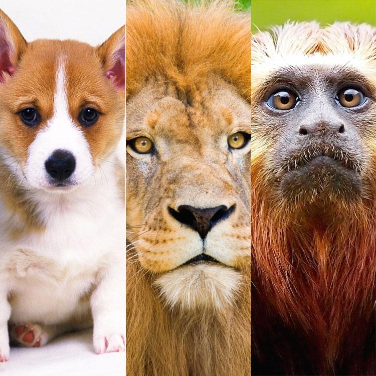 Il cane, il leopardo e la scimmia