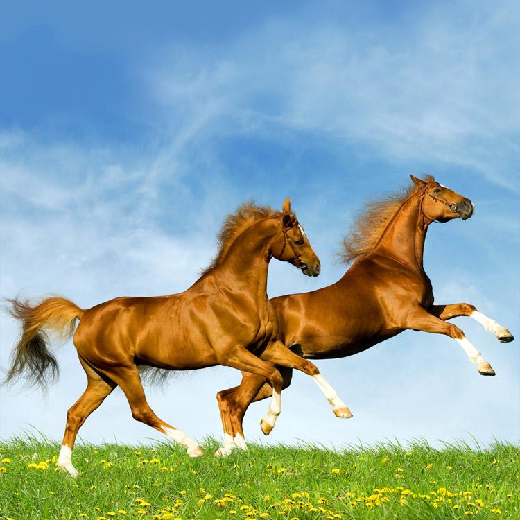 Frasi sui cavalli