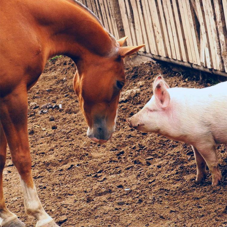 Frasi sugli animali Frasi sui cavalli Frasi sul cavallo Frasi sulla
