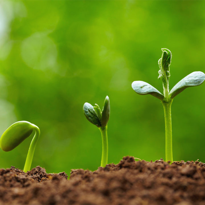 Frasi sul crescere