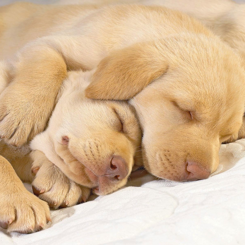 Frasi sul dormire