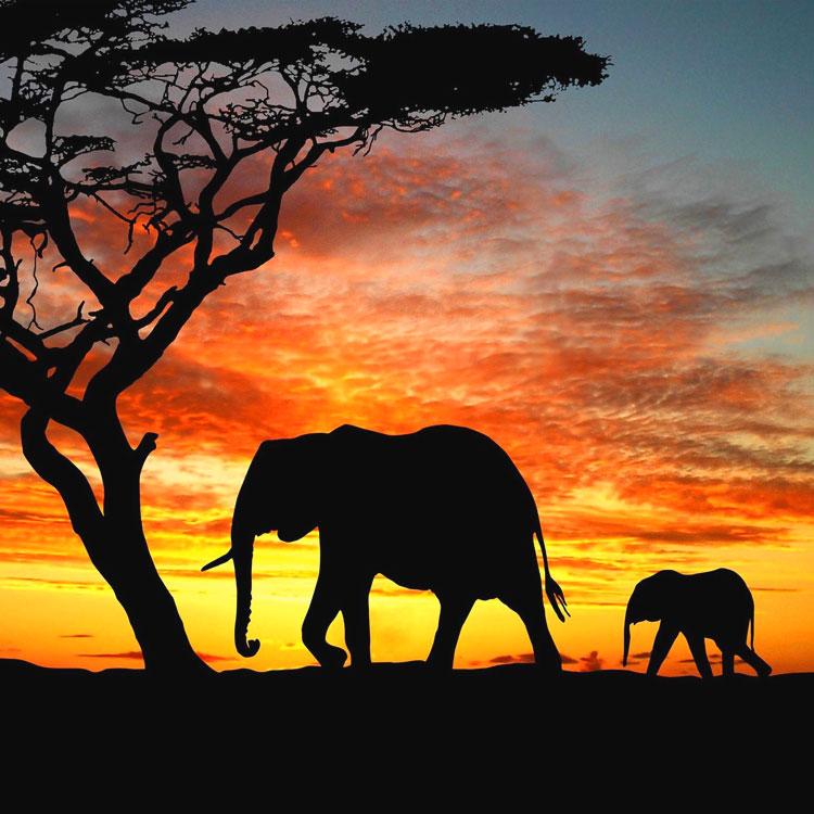 Animali della savana e frigoriferi