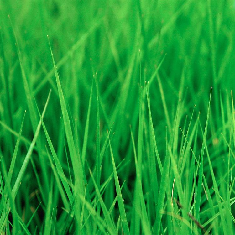 Frasi sull'erba