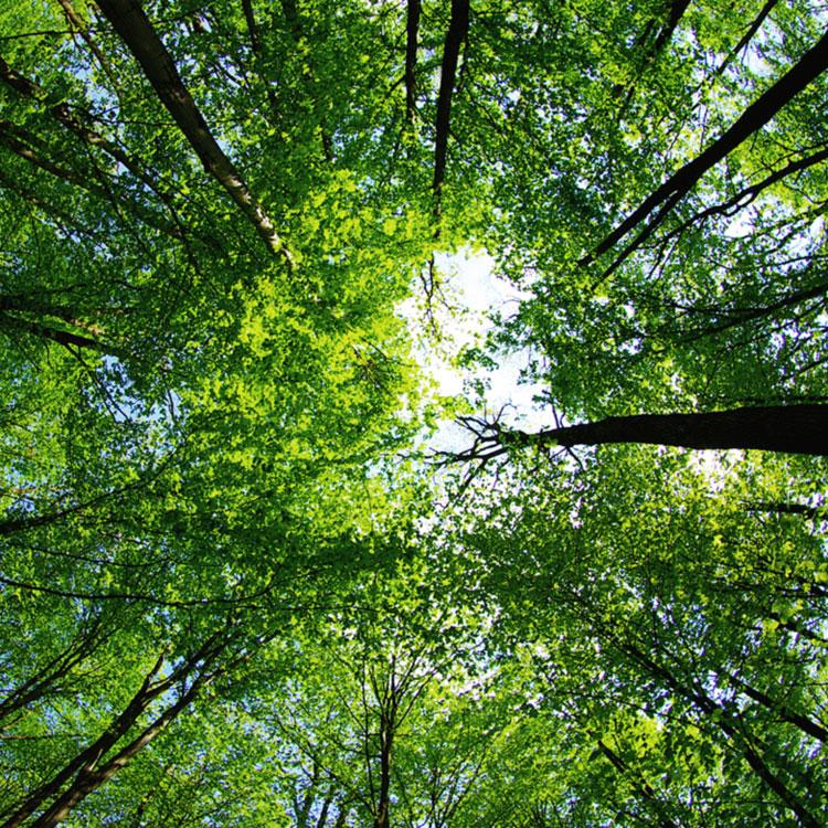 Frasi sulle foreste