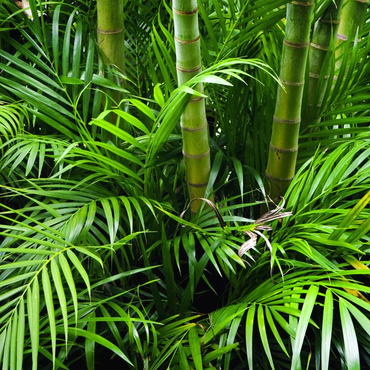 Frasi sulla giungla