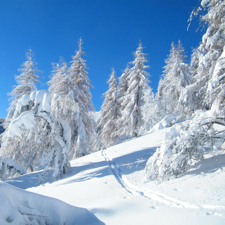 Frasi Sull Inverno