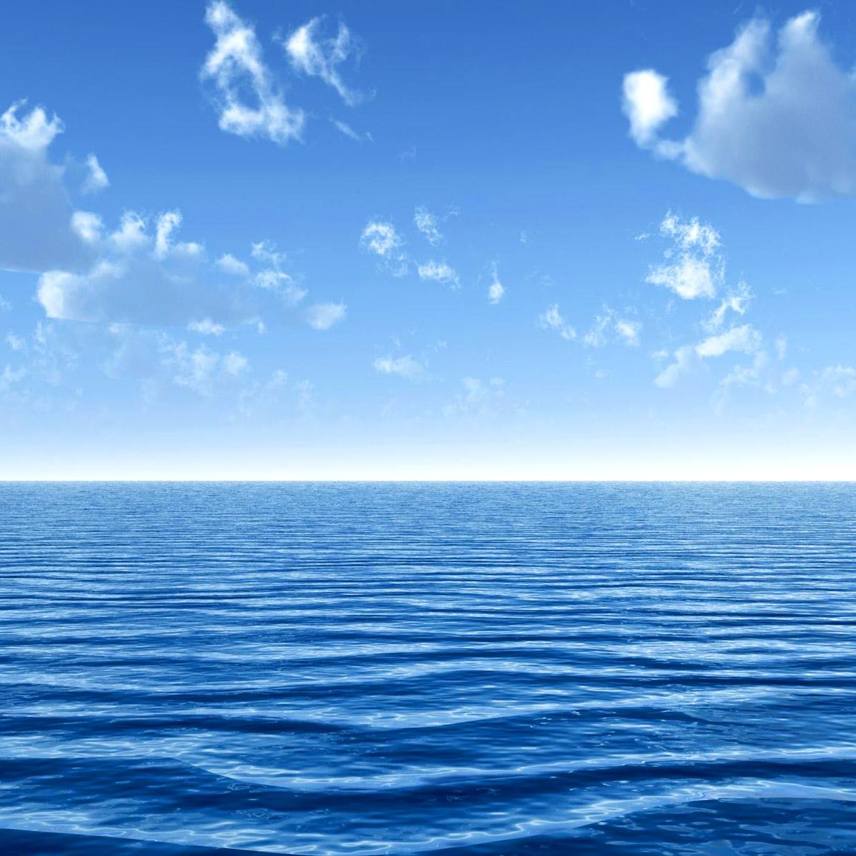 Frasi sull 39 odio - Foto di animali dell oceano ...