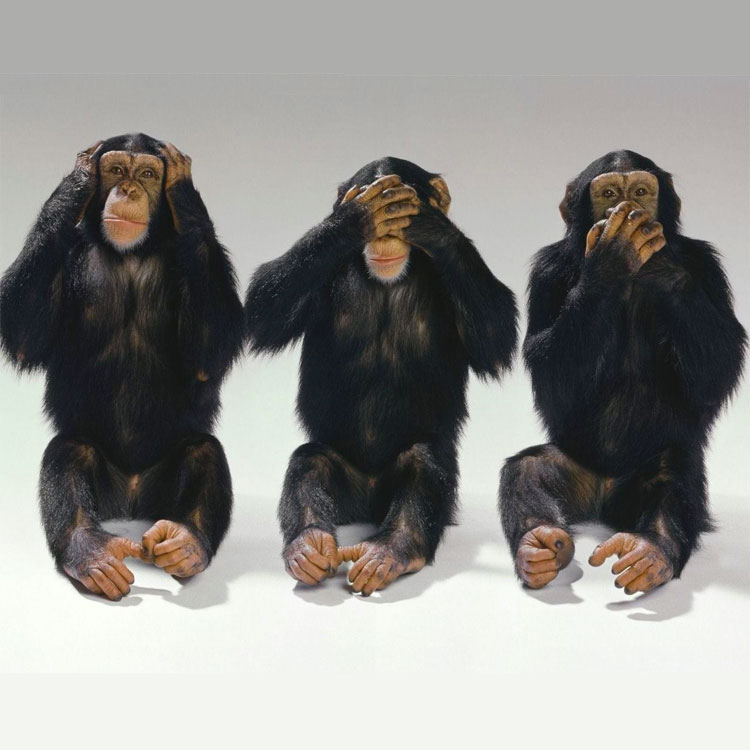 Frasi sulle scimmie