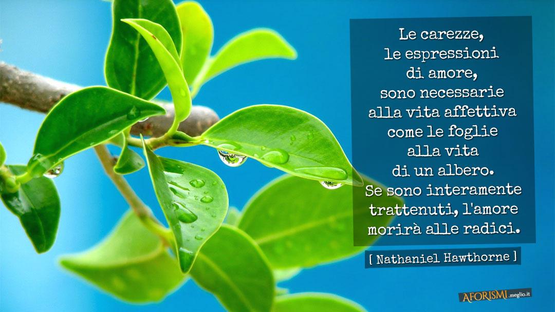 Frasi Vita Albero Vrouwenronddetafel