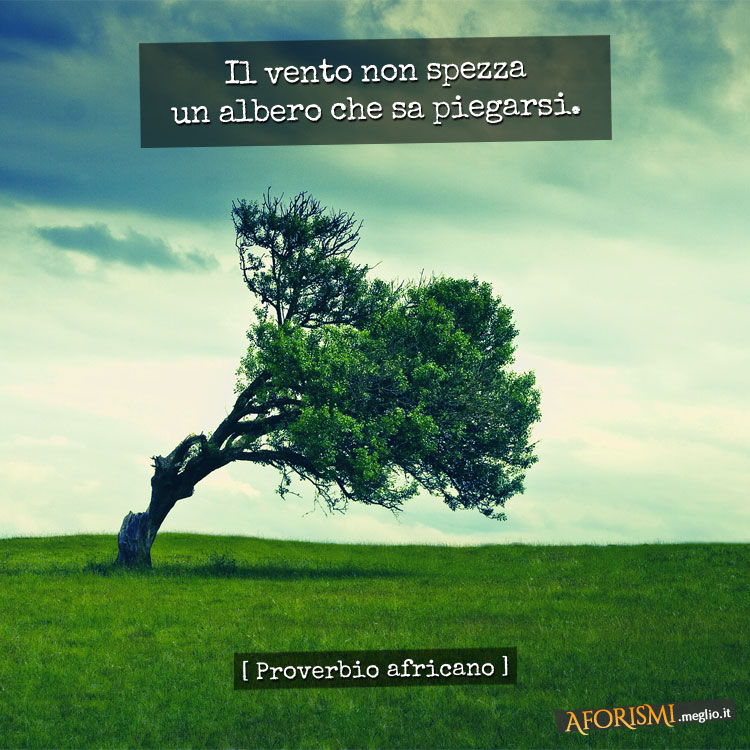 Il vento non spezza un albero che sa piegarsi.