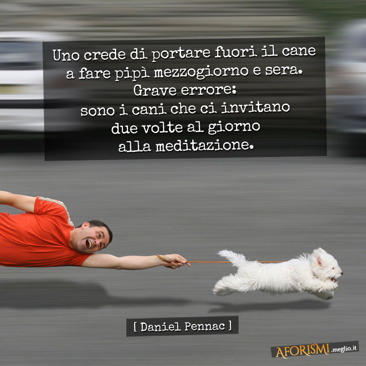 Uno crede di portare fuori il cane a fare pipì mezzogiorno e sera. Grave errore: sono i cani che ci invitano due volte al giorno alla meditazione.