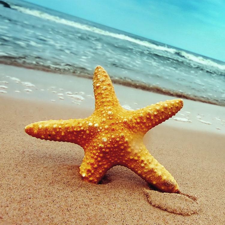 Il bambino e la vita delle stelle marine