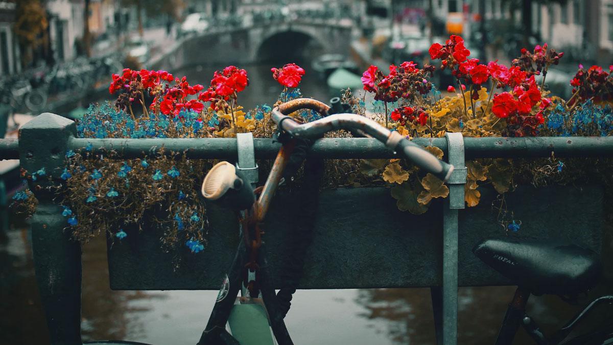 bici vecchia con fiori