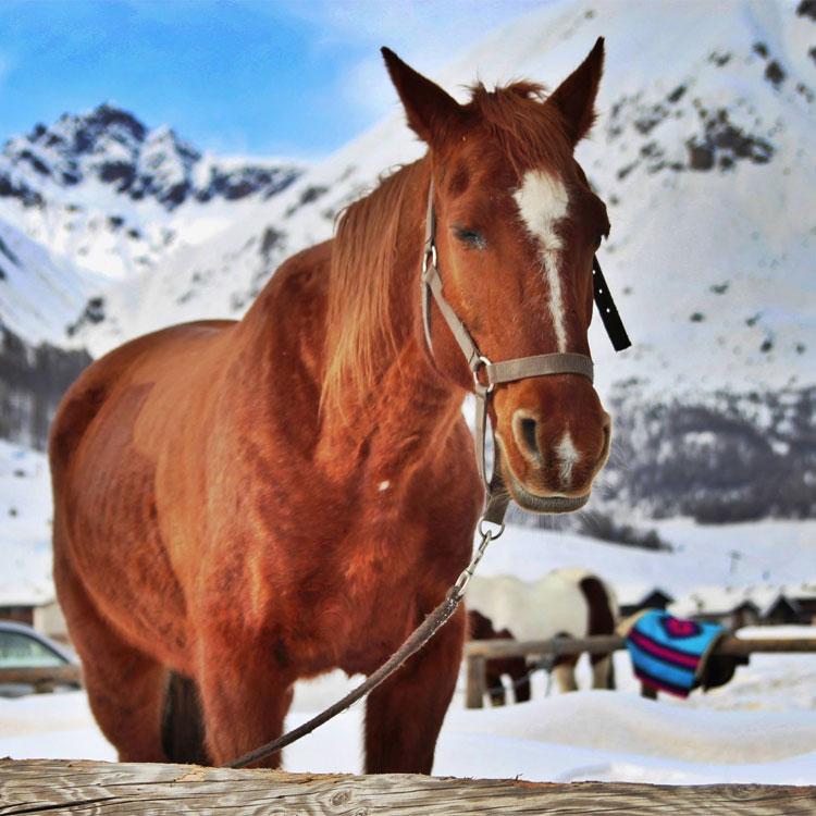 Ben noto sul cavallo OZ21