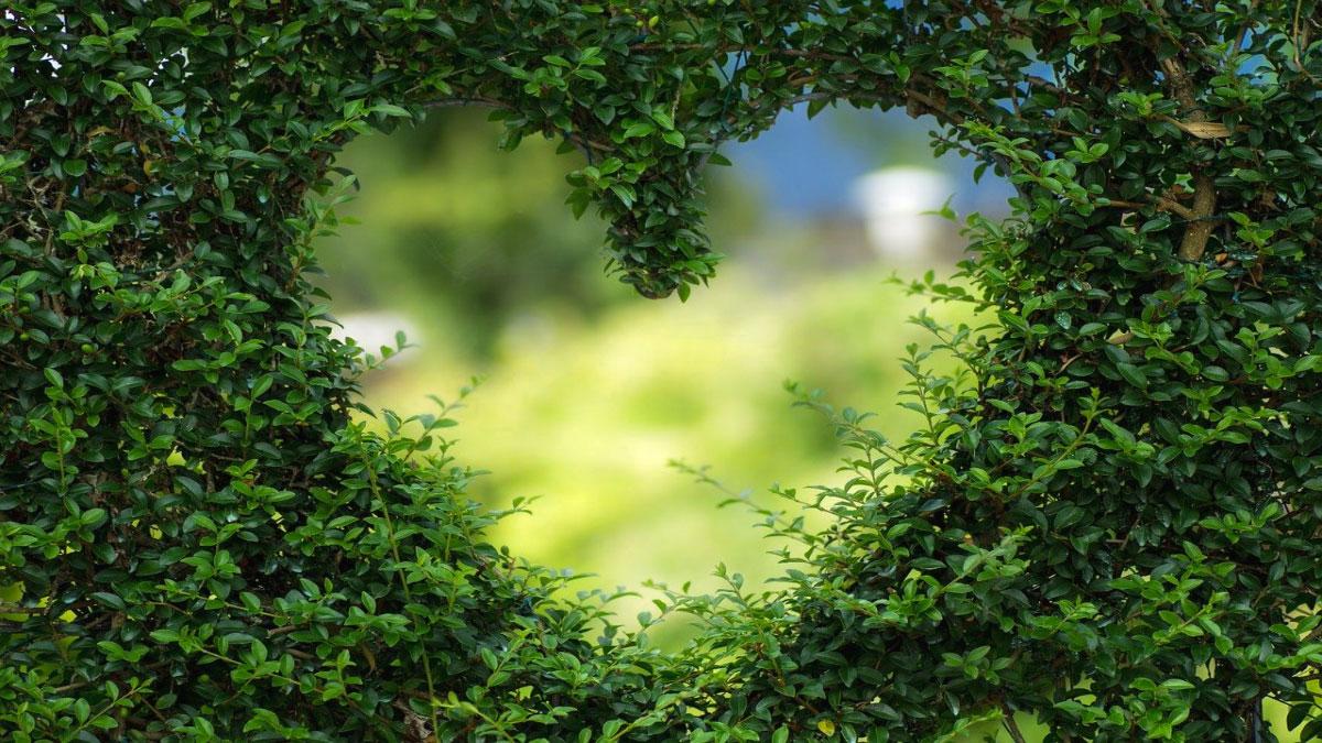 cuore siepe green verde