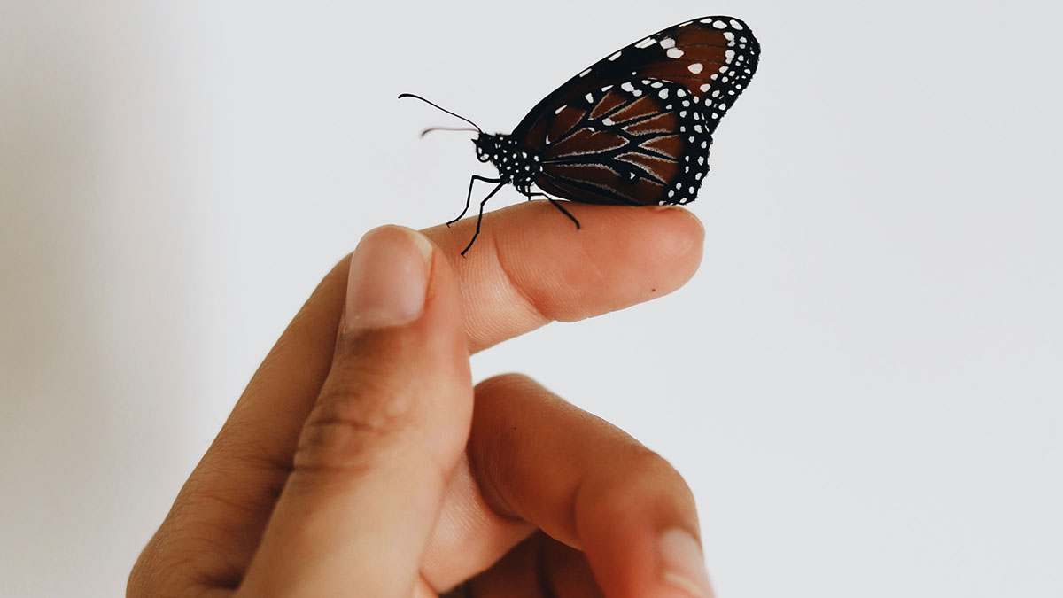 farfalla sulle dita