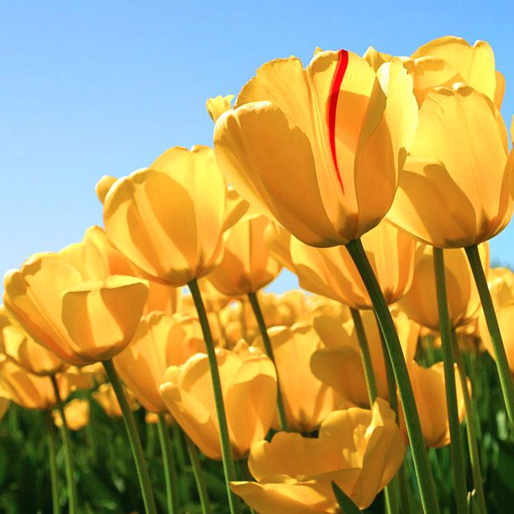 Preferenza sui fiori EQ62