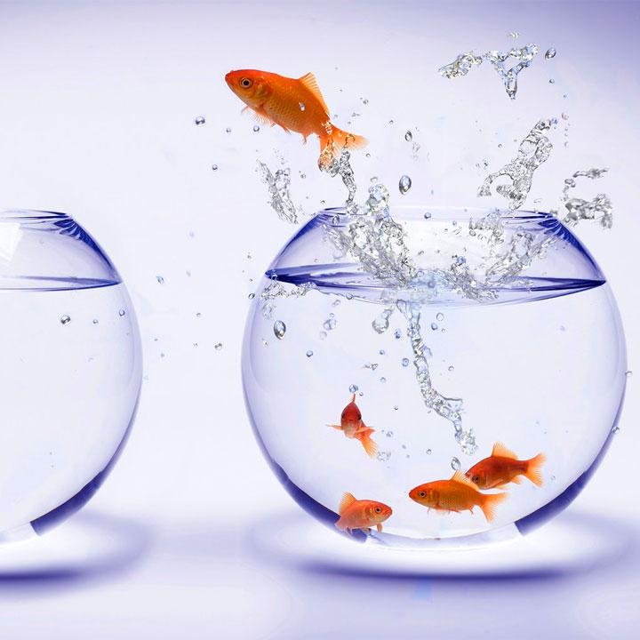 pesce salta fuori dalla boccia