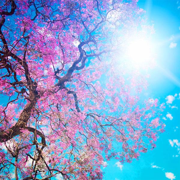 Buona Primavera A Tutti Frasi Di Auguri E Immagini Per Whatsapp