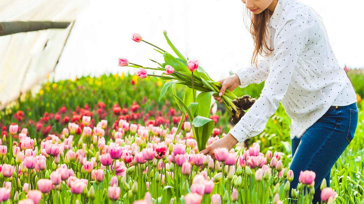 ragazza che raccoglie fiori in una serra