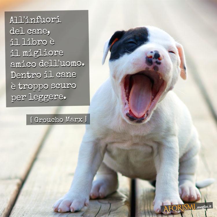 frasi simpatiche sui cani