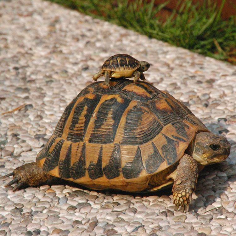 Frasi sulle tartarughe for Contenitore per tartarughe