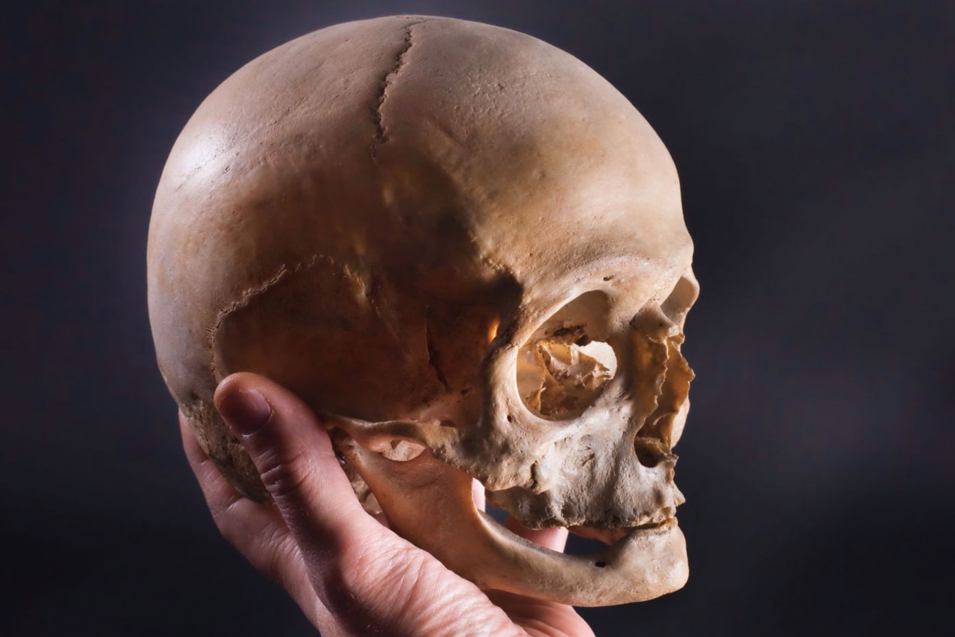 teschio skull shakespeare essere o non essere to be or not to be